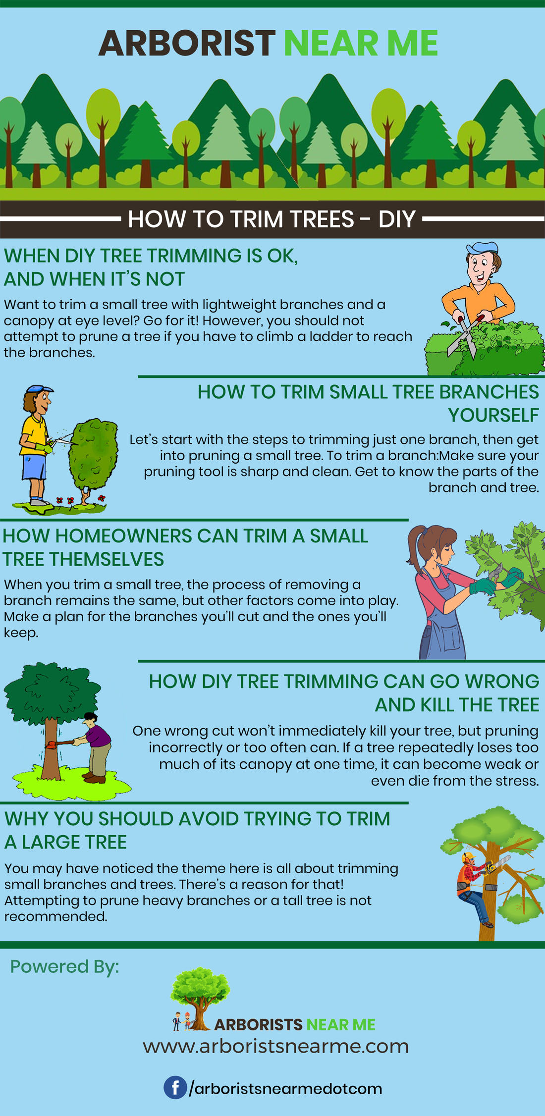How To Trim Trees Diy Tree T Guide