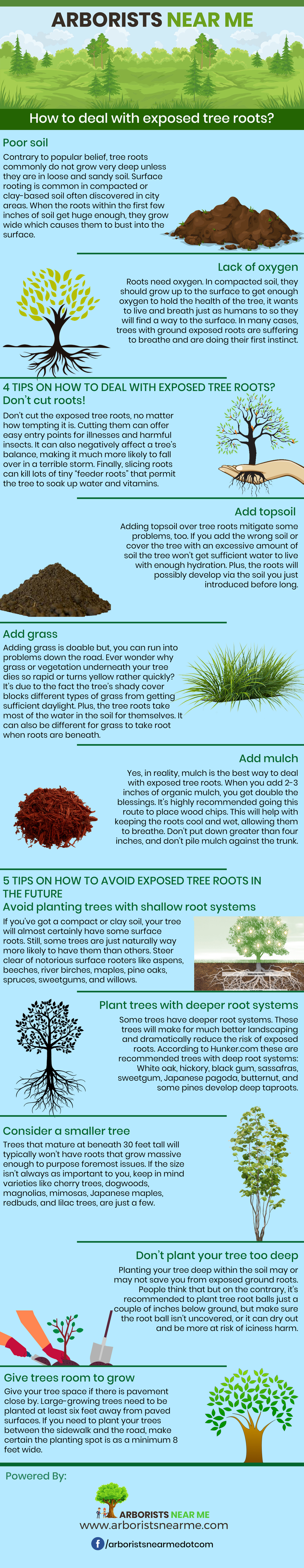 How To Deal With Exposed Tree Roots 4 Tips On What To Do And 5 Ways To Avoid This