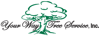 Tree Service Your Way Tree Service in Los Angeles CA