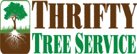 Tree Service Thrifty Tree Service Inc. in Los Angeles CA