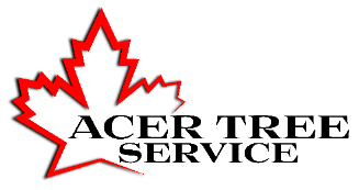 Acer Tree Service