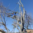 Tree Service Arbor Pro Tree Care and Certified Arborist in Waxahachie TX