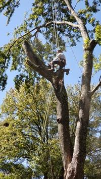 G & C Tree Service in Action
