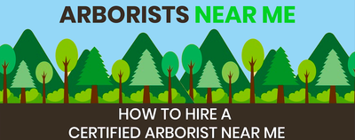 Arborist Near Me - How to hire a Certified Arborist Near You!