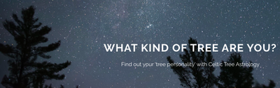 EVER WONDER WHAT KIND OF TREE YOU ARE?