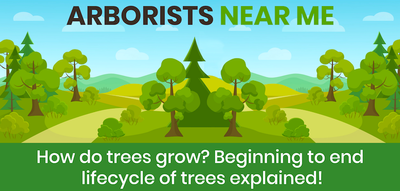 How do trees grow? Beginning to end lifecycle of trees explained!