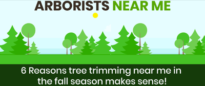 6 Reasons tree trimming near me in the fall season makes sense!