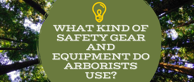 What Kind of Safety Gear and Equipment Do Arborists Use?