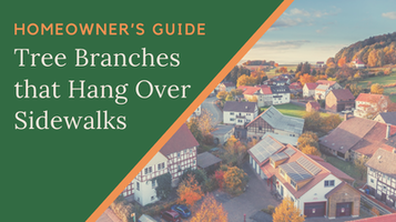 Homeowner's Guide - Tree Branches that Hang Over Sidewalks