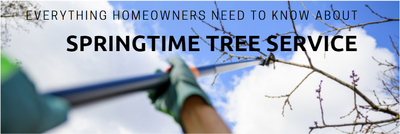 Everything homeowner's need to know about Spring tree trimming...
