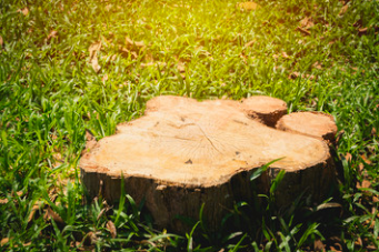 WHAT IS BETTER TREE STUMP REMOVAL OR GRINDING A STUMP?