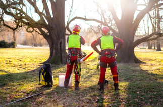 WHATS THE DIFFERENCE BETWEEN AN ARBORIST AND CERTIFIED ARBORIST?