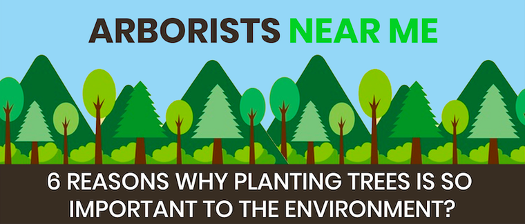 6 REASONS WHY PLANTING TREES IS SO IMPORTANT TO THE ENVIRONMENT?