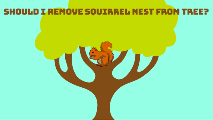 Should I remove squirrel nest from tree?