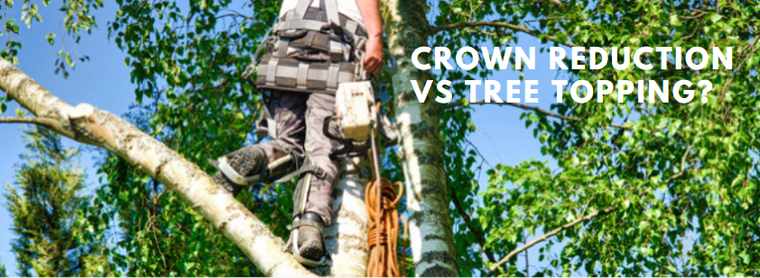 What's the difference between Crown Reduction vs Tree Topping?