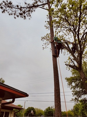 25% OFF for Tree Trimming & Removal